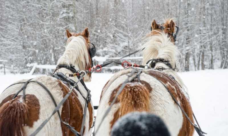 Sleigh Ride Winter Horse